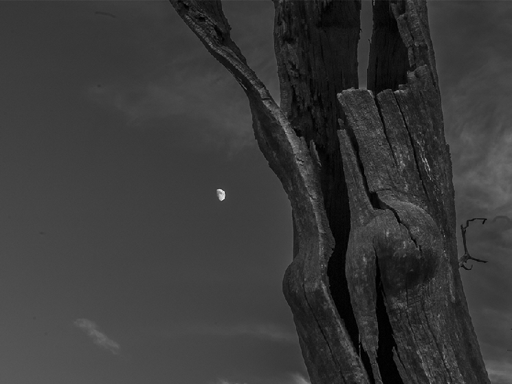 The trunk of a long dead submerged tree is cast against a halfmoon sky. A stark reminder of the passing of time.