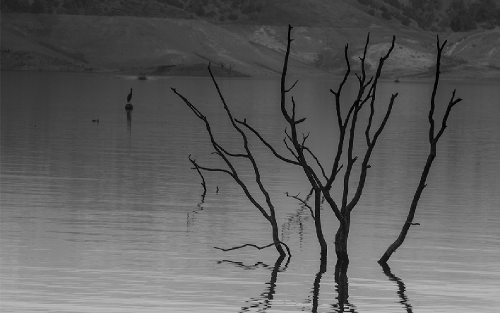 During drought years,  dead submerged trees appear as the water level drops dramatically creating ghostly silhouettes.